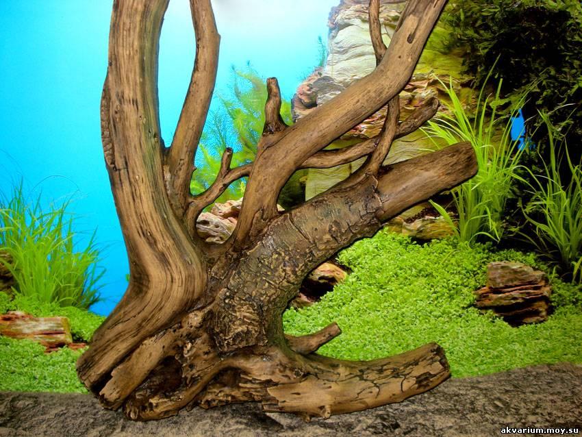 Сделать корягу для аквариума своими руками