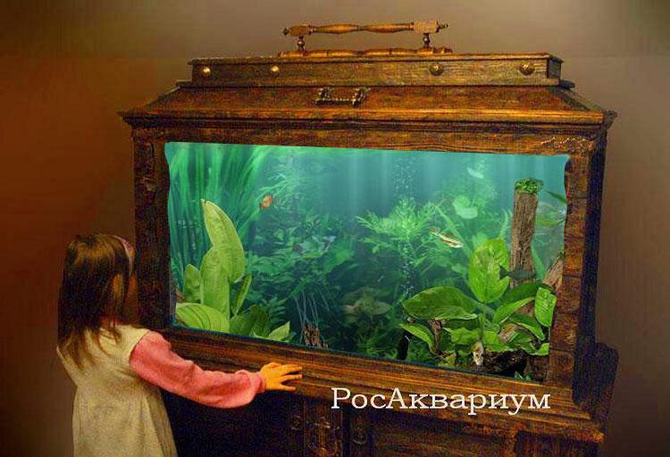 Деревянный аквариум своими руками