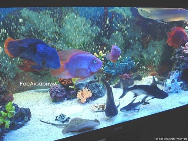Дизайн аквариума с корягами
