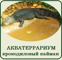 Купить террариум для крокодила