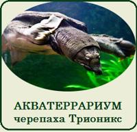 Купить террариум аквариум для черепахи трионикс