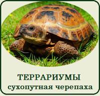 Купить террариум для сухопутной черепахи