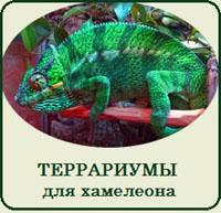 Купить террариум для хамелеона